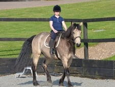 Pony Club Ponies horse - 8 yrs 14.1 hh Dun - Suffolk