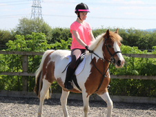 Gorgeous 11yo 13. 2hh Cob X For Sale