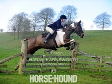 All Rounder horse - 5 yrs 15.2 hh Coloured - West Midlands