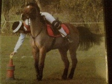 All Rounder horse - 13 yrs 2 mths 12.1 hh Bay - Somerset