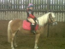 Other horse - 5 yrs 9 mths 14.1 hh Palomino - Lincolnshire