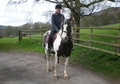 Beautiful 14.2hh Skewbald Mare