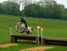 All Rounder horse - 13 yrs 15.3 hh Appaloosa - Leicestershire