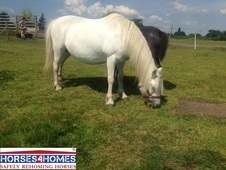 Dolly & Her Foal, Welsh Section A, 8 Years, Mare - West Yorkshire