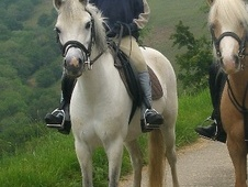 Pony Club Ponies horse - 14 yrs 12.0 hh Grey - Powys