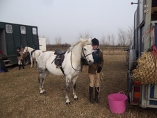 Riding Club Horses/Ponies horse - 10 yrs 1 mth 13.0 hh Dapple Gre...