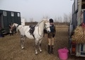 Riding Club Horses/Ponies horse - 10 yrs 1 mth 13.0 hh Dapple Grey - Cambridgeshire