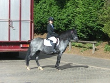 Lead Rein & First Ridden horse - 13 yrs 12.0 hh Blue Roan - West ...