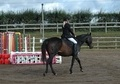 Dressage horse - 9 yrs 15.2 hh Dark Bay - West Midlands