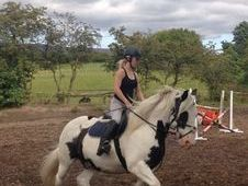 Stunning 15hh 12yrs Coloured Irish Cob