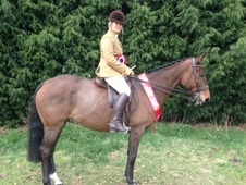 All Rounder horse - 10 yrs 16.0 hh Bay - West Midlands