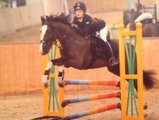 8 year old bay gelding for sale. He is a brilliant jumper and gre...