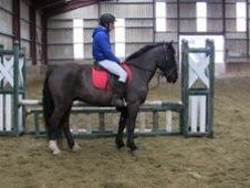 All Rounder horse - 7 yrs 14.3 hh  - Laois