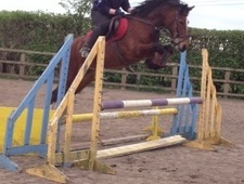Riding Club Horses/Ponies horse - 7 yrs 13.2 hh Bay - Cheshire