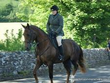 18hh, 9year Old Gelding, Masters Horse
