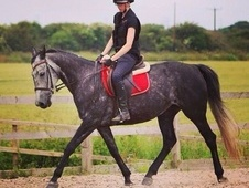 Sold - Ideal Horse For Child Coming Off Ponies Or First Horse