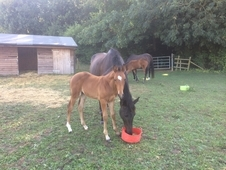 Ellie Dutch X 7 months to make 16. 1 potential all round sports h...