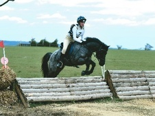 All Rounder horse - 11 yrs 13.3 hh Blue Roan - Northumberland