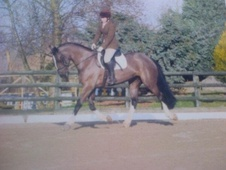 All Rounder horse - 6 yrs 7 mths 16.0 hh Black - Nottinghamshire