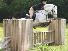 13. 1 Reg. Sec C, Welsh Mountain Grey Roan Mare - 17yrs Old.