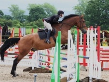 All Rounder horse - 12 yrs 17.2 hh Bright Bay - Cheshire
