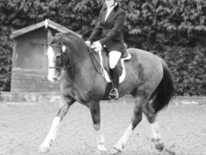 Gorgeous 14. 1hh Pony For Sale