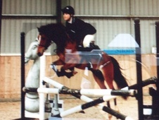 Pony Club Ponies horse - 6 yrs 10 mths 13.0 hh Bright Bay - Worce...