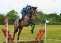 All Rounder horse - 6 yrs 2 mths 16.1 hh Bay - Kent