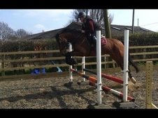 All Rounder horse - 10 yrs 2 mths 15.2 hh Bay - Kent