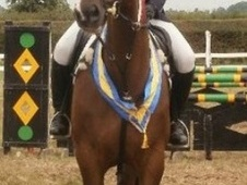 All Rounder horse - 10 yrs 17.1 hh Bay - Lancashire