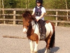 Riding Club Horses/Ponies horse - 3 yrs 12.2 hh Skewbald - Cheshire