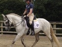 All Rounder horse - 11 yrs 15.2 hh Grey - Oxfordshire