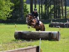 13. 2hh Perfect 1st Pony/pc Allrounder