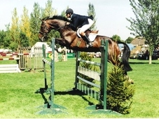 Show Jumping Broodmare