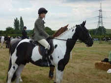 All Rounder horse - 7 yrs 9 mths 14.2 hh Coloured - Nottinghamshire