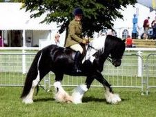 Top quality traditional show cob