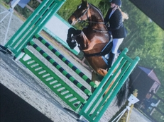 a 16:2 bay showjumping gelding
