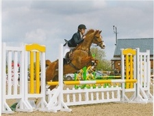 Show Jumpers horse - 15 yrs 14.2 hh Chestnut - West Midlands