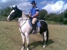 All Rounder horse - 12 yrs 16.0 hh Coloured - Worcestershire
