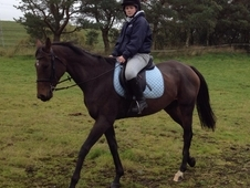 16. 2 Bay Mare For Sale