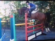Heartbreaking Sale Of My Homebred Unbelievable Darco Mare.