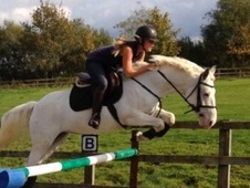 14. 2hh 5yr Old Irish Mare Exceptional Movers