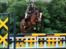 13. 2hh Jumping Pony