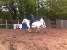 Pony Club Ponies horse - 8 yrs 13.1 hh Grey - East Sussex