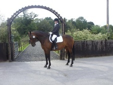 All Rounder horse - 16 yrs 16.2 hh Bay - East Sussex