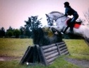 All Rounder horse - 10 yrs 15.1 hh Grey - Surrey