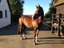 Potential World Class Broodmare