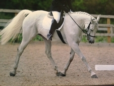 Dream Horse For Sale!