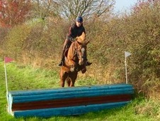 Potential eventer / top allrounder