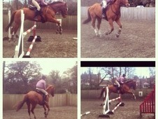 Amazing 16hh Gelding For Sale